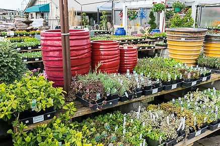 Plant cool seasonal vegetables, bulbs, pansies and perennials.