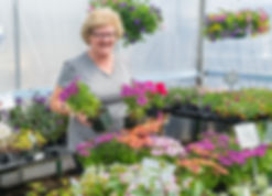 A customer selects some plants for her hanging basket.