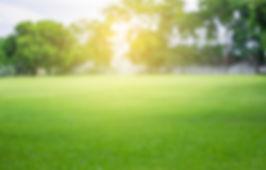 green-grass-720x320_2x.jpg