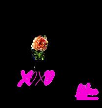 XOXO logotransparetn.png