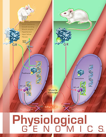 Prednisone vs. Vamorolone