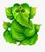 24-246618_transparent-ganesha-png-natura