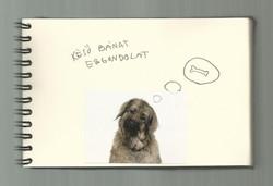 One dog 05