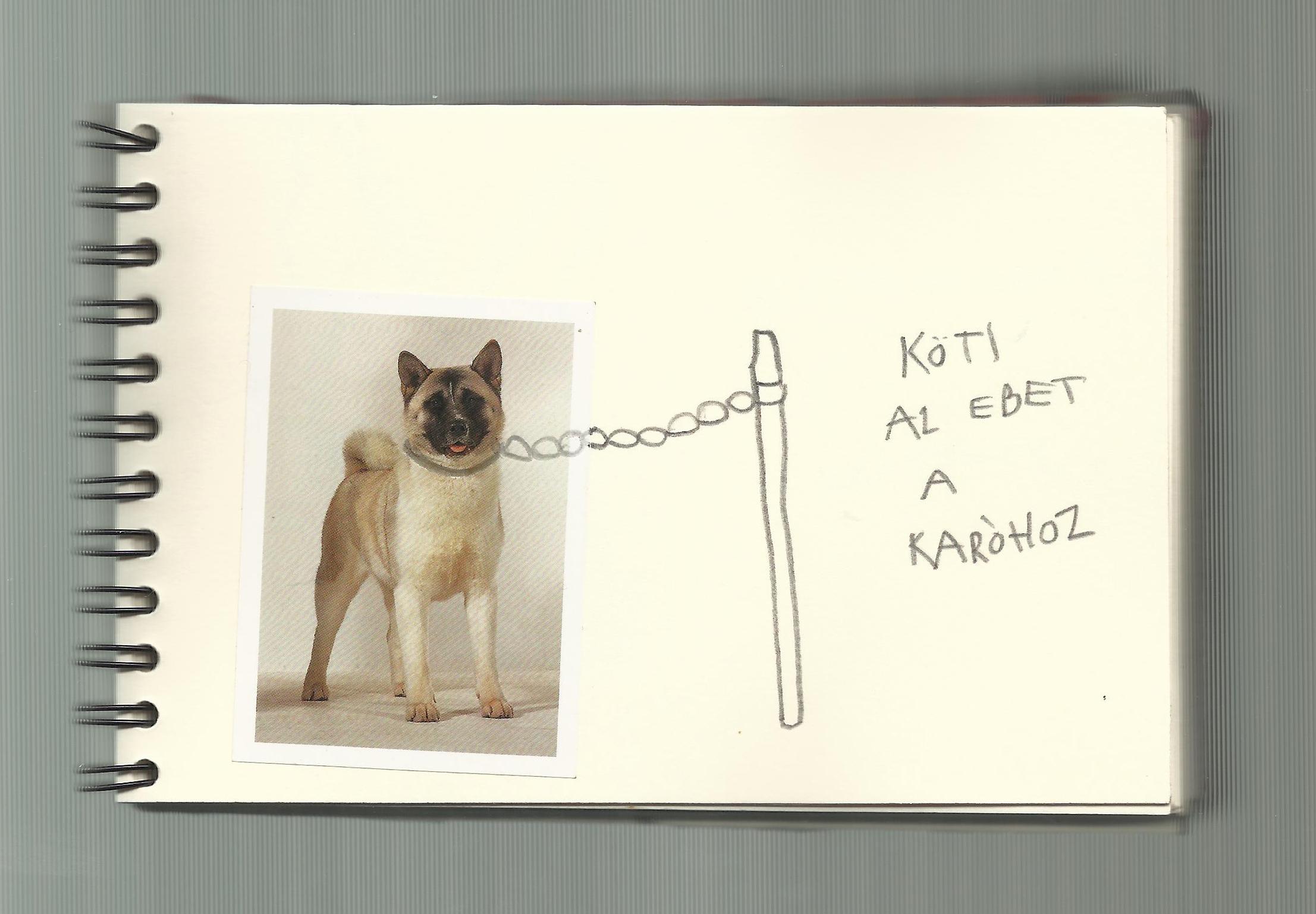 One dog 16