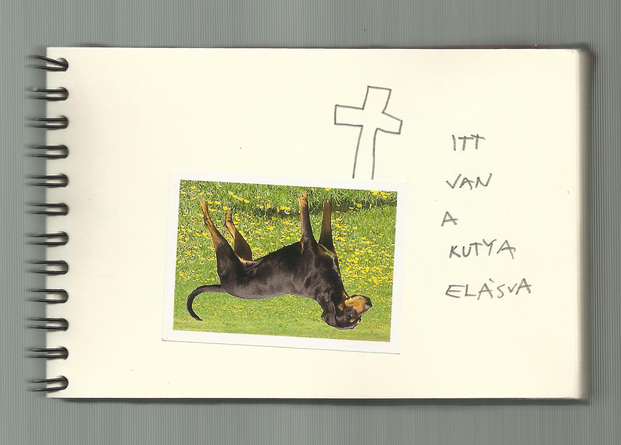 One dog 06
