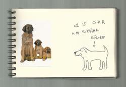 One dog 28