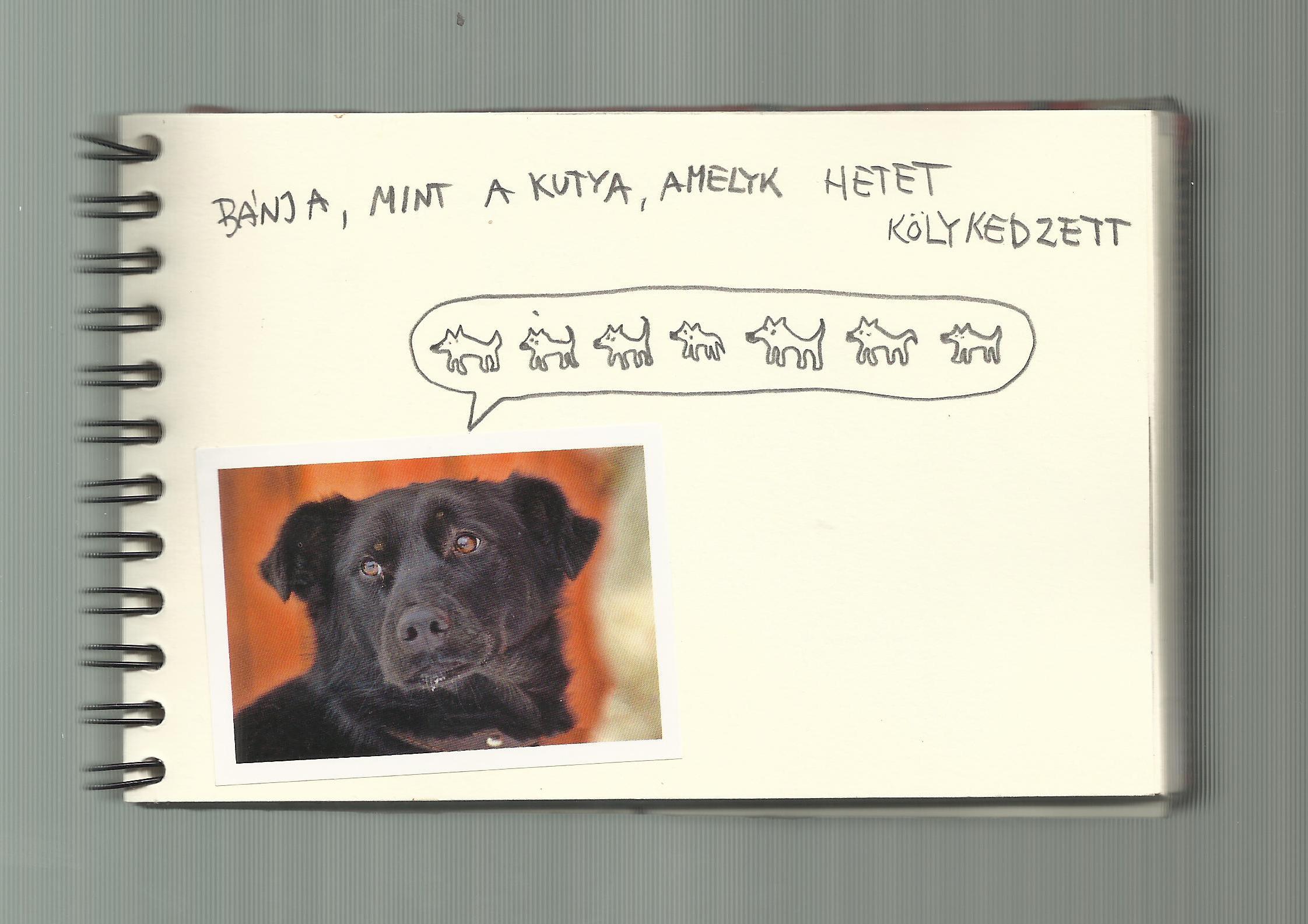 One dog 25