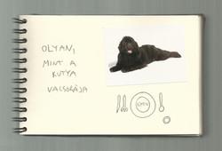 One dog 13