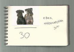 One dog 33
