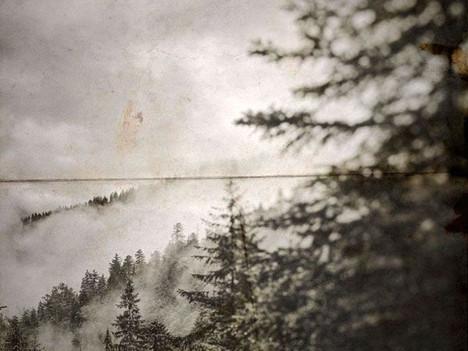 Deep In the Old Forest, el nuevo paseo por la niebla de SomeWhereOut