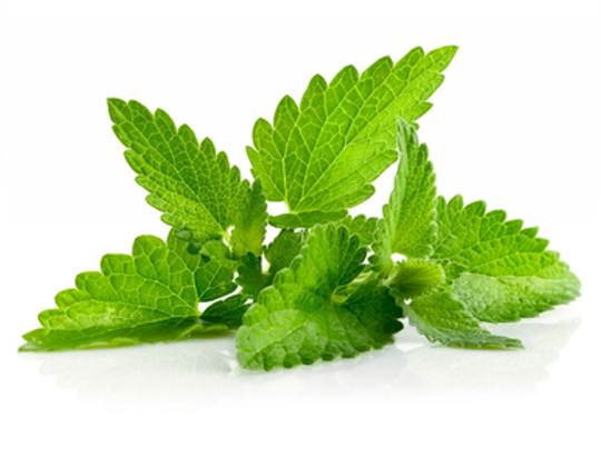 lemon balm leaves 1.png