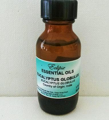 EUCALYPTUS GLOBULUS (Eucalyptus Globulus)