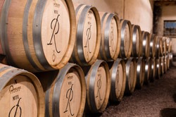 Photographie viticole