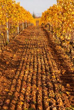 au-coeur-des-vignes-hermitage-automne-MD