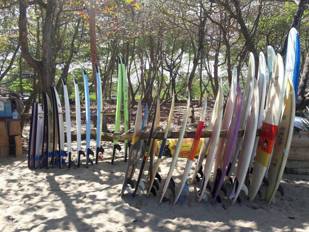 surf boards surf school cabarete