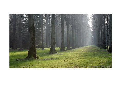 Trees, Westonbirt Arboretum