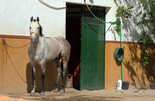 Horse, El Rocio, Spain