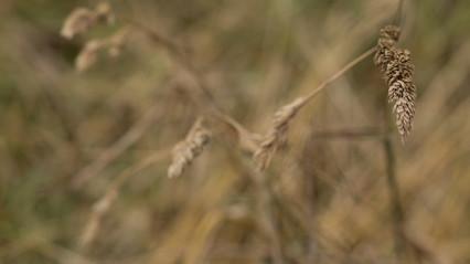 Grasses (1)