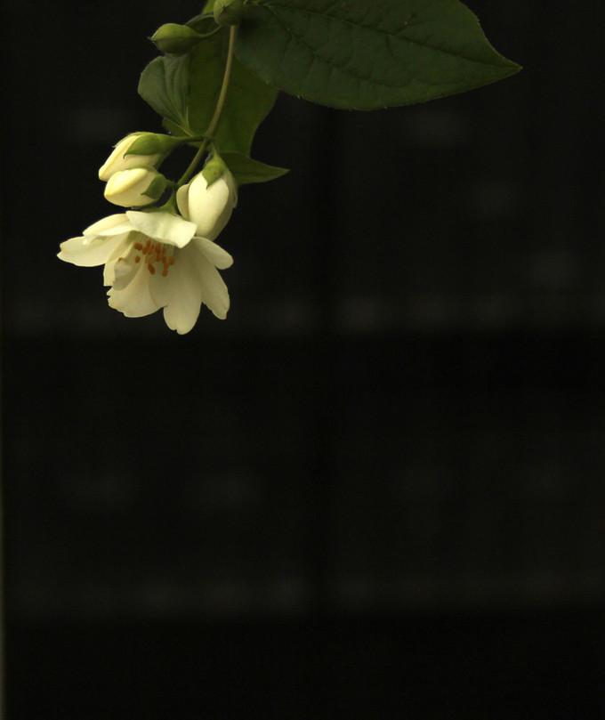 Orange Blossom, Gaucin, Spain