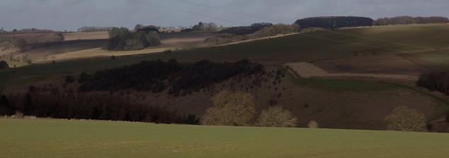 Sunlit tree, Gloucestershire