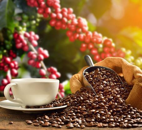 Hiểu về vị đắng của cà phê