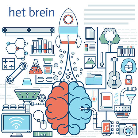 het brein.jpg