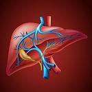 art-liver-AL-1a.jpg