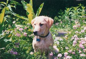 Bucket Lists, part 2: Outdoor Activities For Senior Dogs in