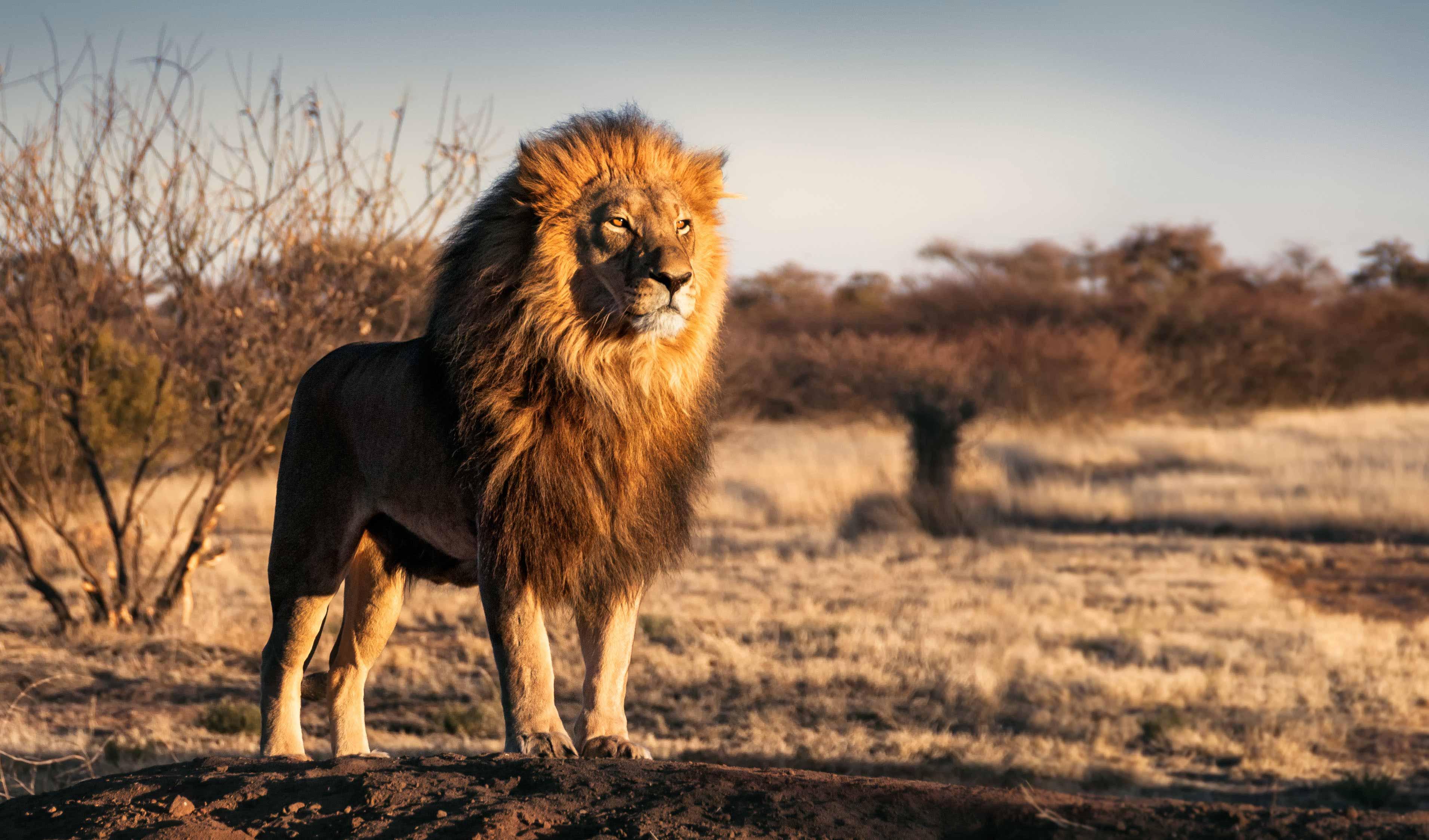 LionHeart Services Group
