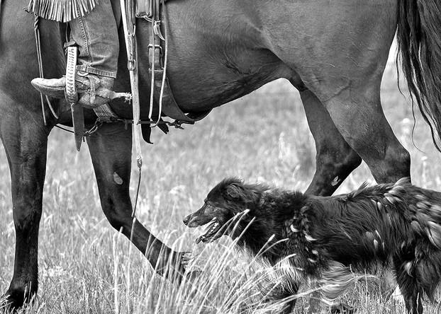 Ranch Photo
