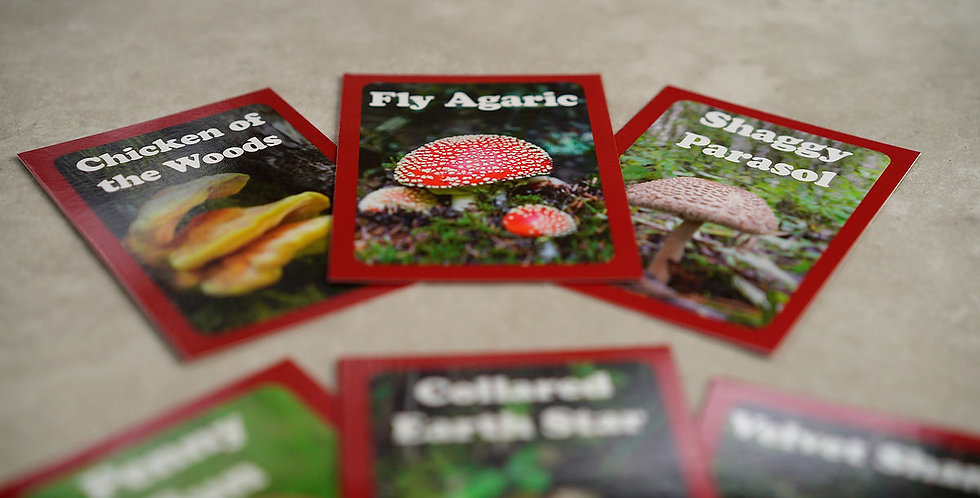 Fungi Discovery Cards