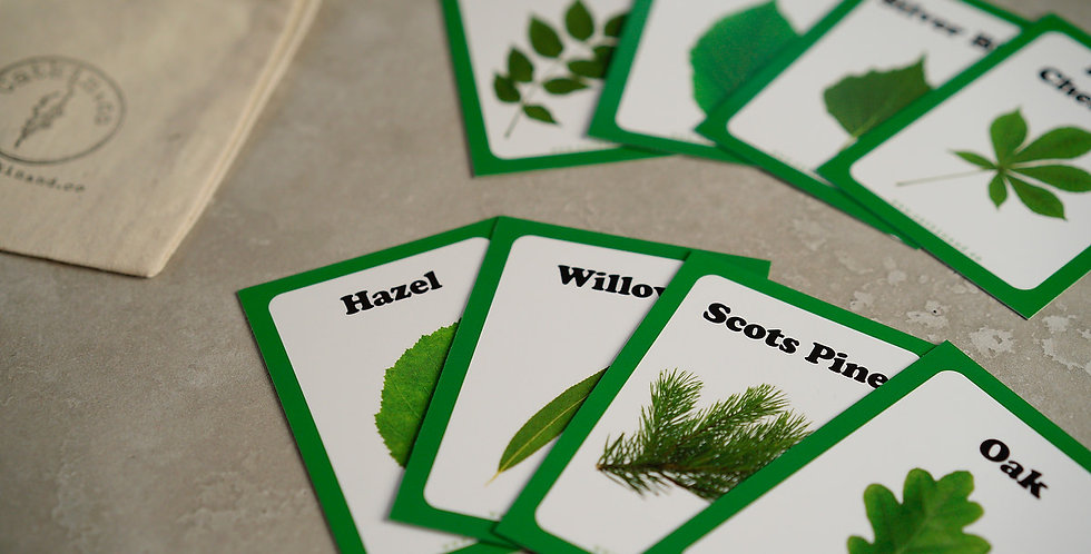 Double Pack - Tree Leaf Identification Cards