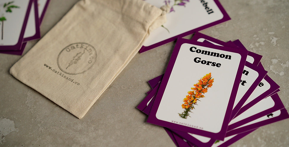 Wildflower Discovery Cards