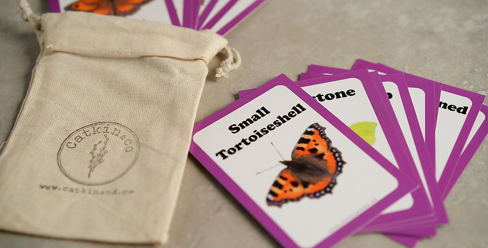 Butterfly Discovery Cards