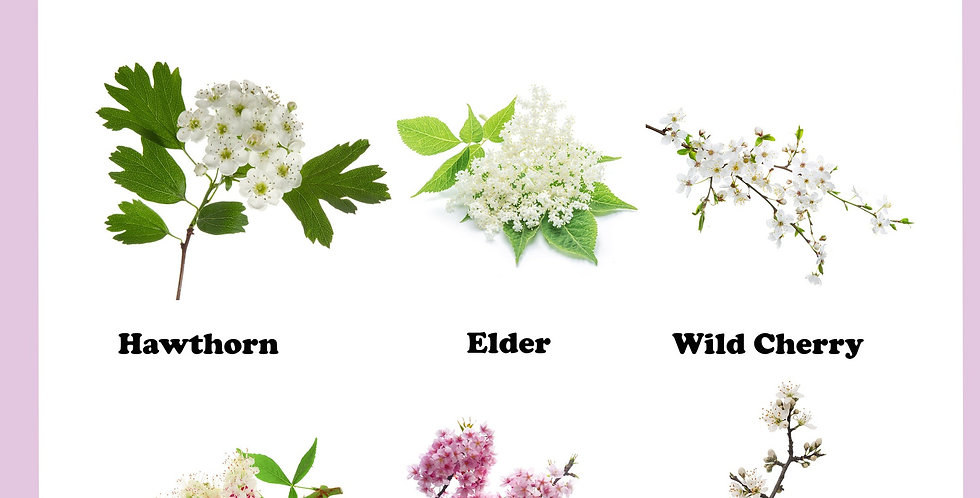 Blossom & Tree Flowers
