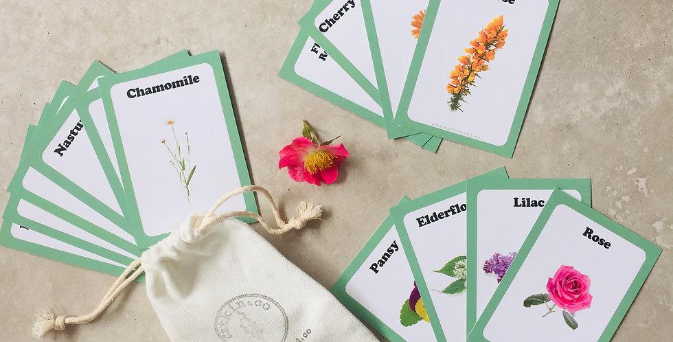 Foraging - Edible Flowers