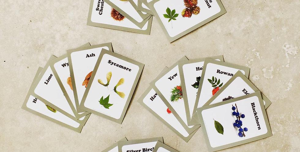 Tree Fruits (Nuts & Seeds)
