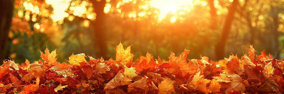 Autumn_Hero.jpg