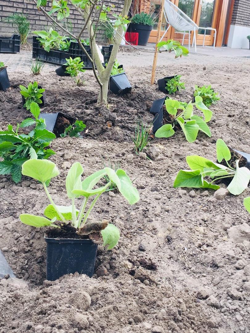 planting peerenials