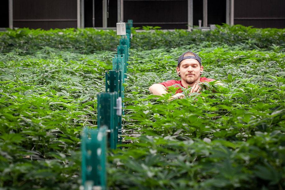 Cannabis Marketing Image.jpg