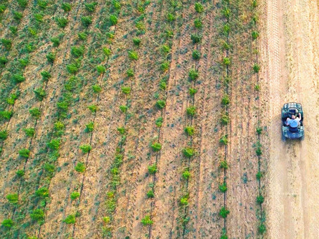 How A Drone Can Improve Your Cannabis Marketing