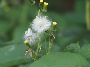 ☆東久留米の野草 7月から8月に花を咲かせた主な野草