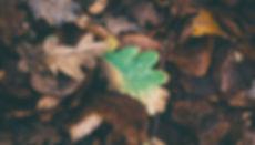 leaves-1149004.jpg