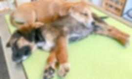 Gerzensee Tierarztpraxis 20180921 _DSC25