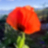 IMG_8130.jpg