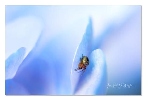 tuin hortensia-6579 dec2019 wix.jpg