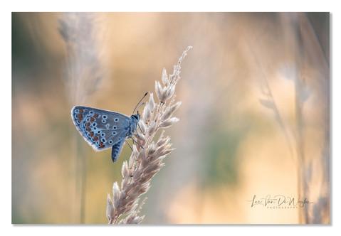 vlinders melle-8465 dec2019 wix.jpg