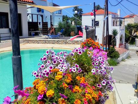 Meet the spring in Crete !