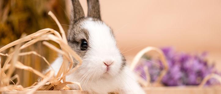 rabbits_1.jpg