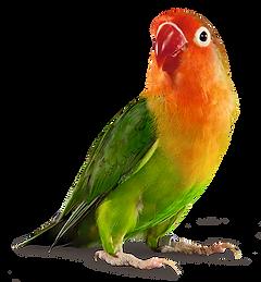 002_bird.png